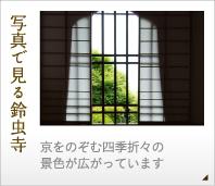 写真で見る鈴虫寺-京をのぞむ四季折々の景色が広がっています