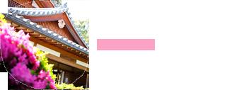 春の鈴虫寺