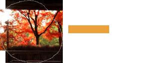 秋の鈴虫寺